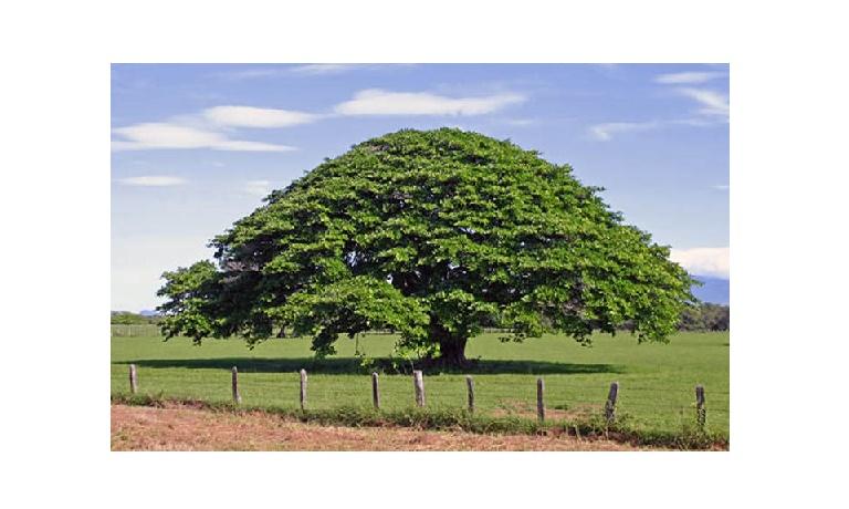 Resultado de imagen para el árbol